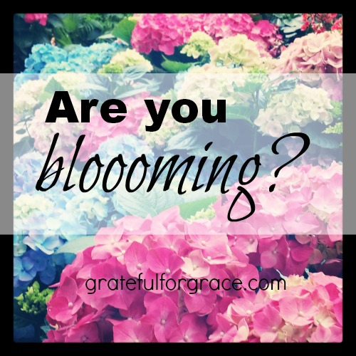 Blooming PIN photo